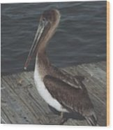 Brown Pelican On Pier 2 Wood Print