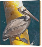 Brown Pelican On Platfrom Wood Print