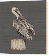 Brown Pelican - Preening - Transparent Wood Print