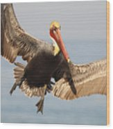 Brown Pelican Putting On The Brakes Wood Print