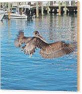 Brown Pelican Taking Flight Wood Print