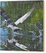 Brown Pelican Taking Off Wood Print