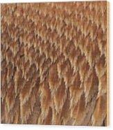 Brown Pelican Wings Wood Print