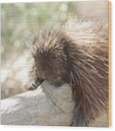 Brown Porcupine On A Fallen Log Wood Print
