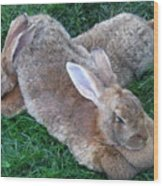 Brown Rabbits Wood Print
