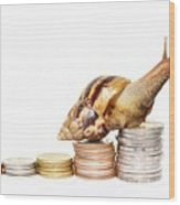 Brown Snail Climbing To The Top Of The Pile Of Coins  Wood Print