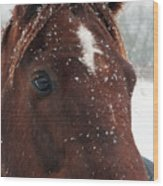 Brown Snow Horse Wood Print