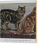 Brown Tabby And Orange Tabby Wood Print