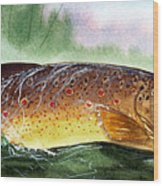 Brown Trout Taking A Fly Wood Print by Sean Seal