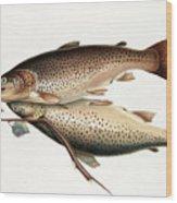 Brown Trout Wood Print