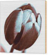 Brown Tulip Wood Print
