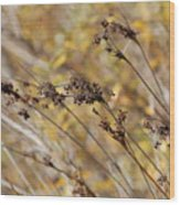 Brown Wildgrass Wood Print