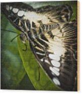 Brown_clipper Wood Print