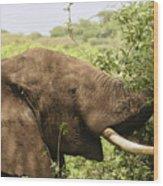 Browsing Elephant Wood Print