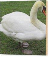 Bruges Swan 1 Wood Print