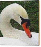 Bruges Swan 2 Wood Print