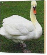 Bruges Swan 3 Wood Print