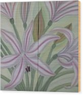 Brunsvigia Grandiflora Wood Print