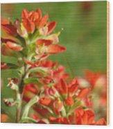 Brush Of Red Wood Print