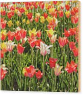 Brushed Tulips Wood Print