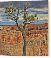Bryce Canyon 46 - Sunrise Point Wood Print