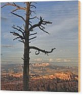 Bryce Canyon Dead Tree Sunset 3 Wood Print