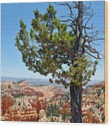 Bryce Canyon Fairyland Point Portrait Wood Print