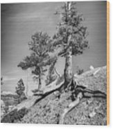 Bryce Canyon Treescape Wood Print
