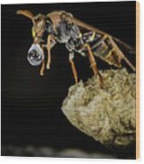 Bubble Blowing Wasp Wood Print