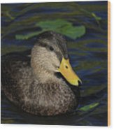 Bubble Duck Wood Print