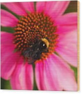 Bumble On A Pistil Wood Print