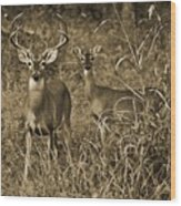 Buck And Doe In Sepia Wood Print