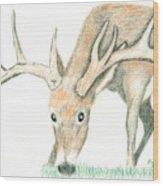 Buck Feeding Wood Print