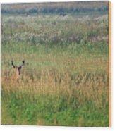 Buck In Field Wood Print