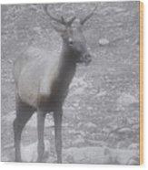 Buck In Fog On Hurricane Ridge - Olympic National Forest - Olympic National Park Wa Wood Print