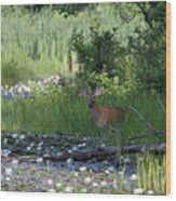 Buck In Pond Wood Print