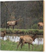 Buck In Wilderness Wood Print