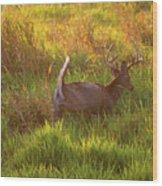 Buck On The Run  Wood Print