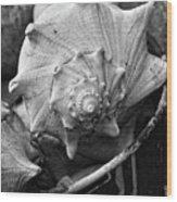 Bucket Of Sea Shells Wood Print