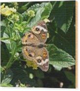 Buckeye At Caumsett Wood Print