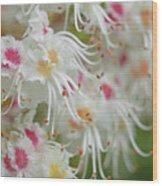 Ohio Buckeye Blooms Wood Print