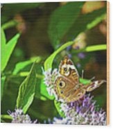 Buckeye Butterfly On The Move 1 Wood Print