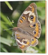 Buckeye Butterfly Square Wood Print