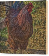 Buckeye In The Barnyard Wood Print