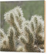 Buckhorn Cholla Wood Print