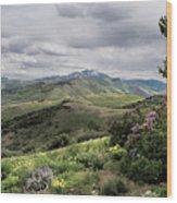 Buckskin Cyn June-3125-r2. Wood Print