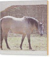 Buckskin Horse  Wood Print