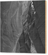 Buckskin In Black And White Wood Print