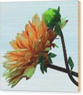 Bud And Blossom Wood Print