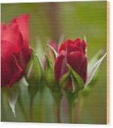Bud Bloom Blossom Wood Print